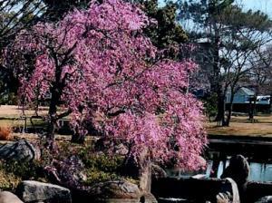 【レストハウス画像】レストランフロア枝垂桜