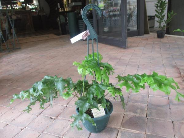 観葉植物(1)