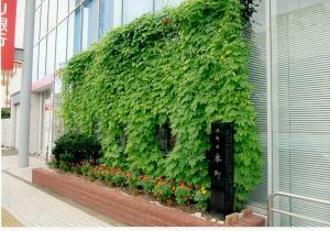 R3グリーンカーテン三菱UFJ銀行様