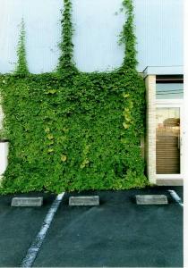 R3グリーンカーテンカットハウスコジコジ様