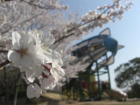 桜とツェッペリン