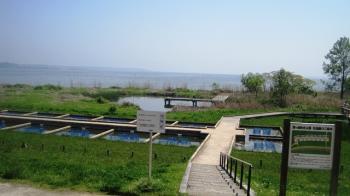 水生植物園1