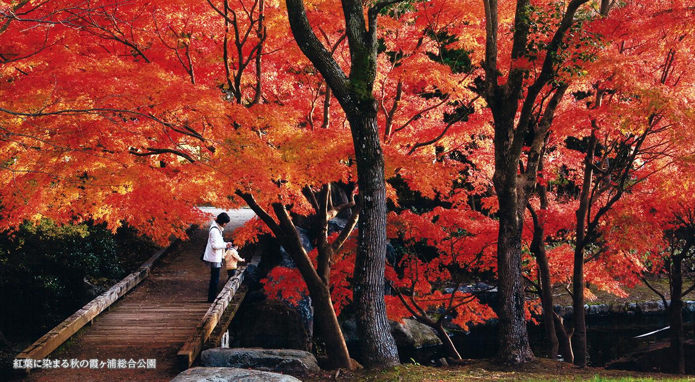 紅葉に染まる秋の霞ヶ浦総合公園