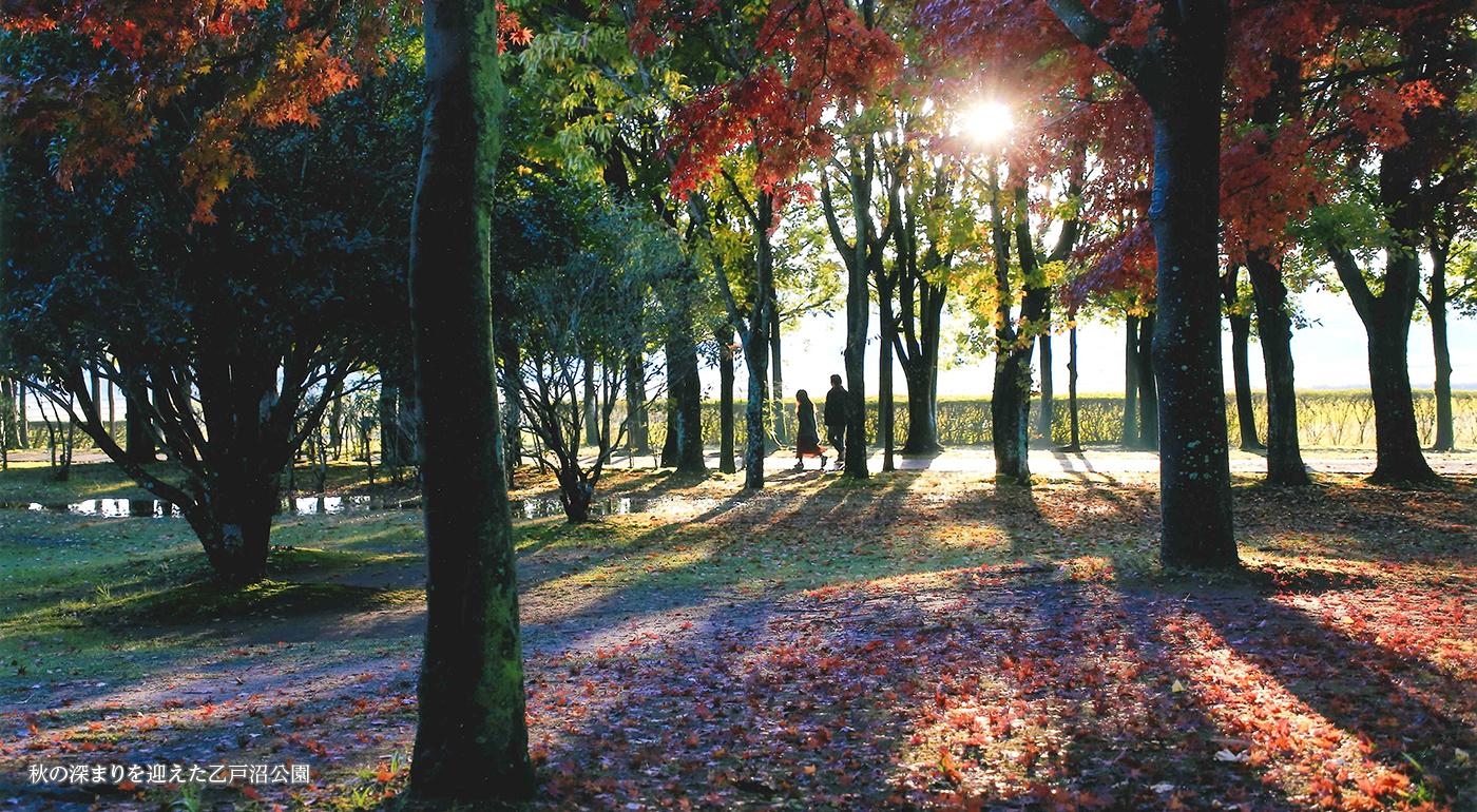 秋の深まりを迎えた乙戸沼公園