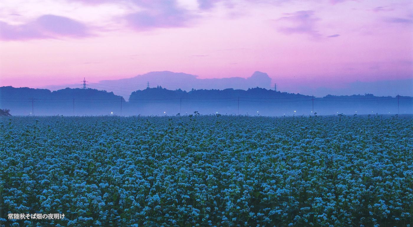 常陸秋そば畑の夜明け
