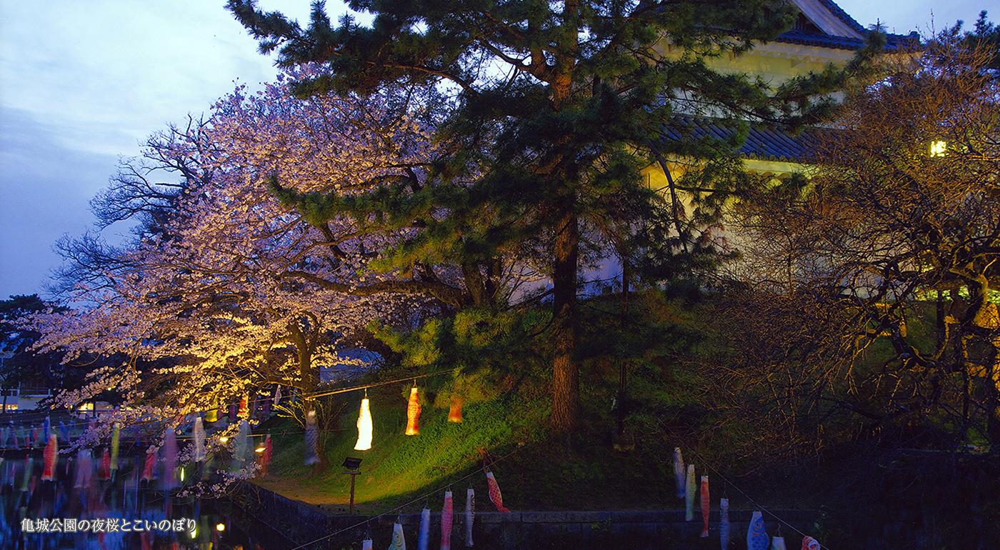 亀城公園の夜桜とこいのぼり