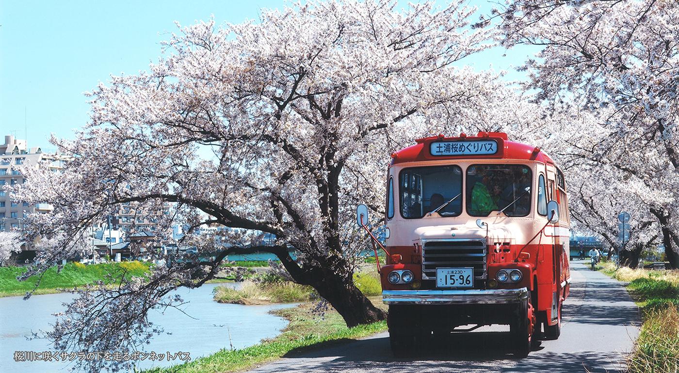 桜川に咲くサクラの下を走るボンネットバス